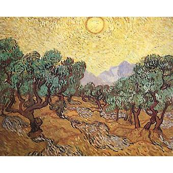Olive Trees with Yellow Sky and Sun, Vincent Van Gogh, 50x40cm