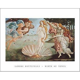 Geburt der Venus Poster Print von Sandro Botticelli (28 x 22)