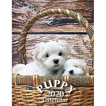 Puppy 2020 Calendar