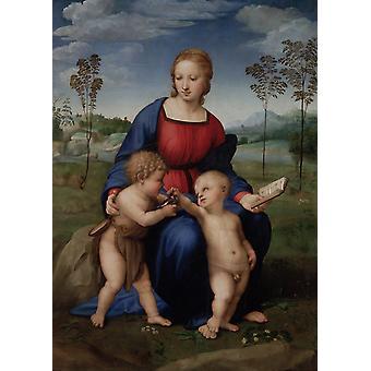 Madonna of the Goldfinch,Raphael,50x36cm