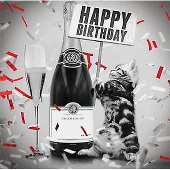 Magnet & Steel Kitten Card with Champagne (Cats , Training Aids , Anti-Stress)