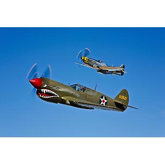 A North American P-51D Mustang Kimberly Kaye and a Curtiss P-40E Warhawk in flight near Chino California Poster Print