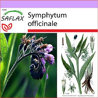 Saflax - 15 semillas - Comfrey - Consoude - maggior Consolidae - Consuelda - Beinwell