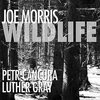 Morris/Cancura/Gray - Wildlife [CD] USA import