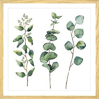 Poster aquarel eucalyptus