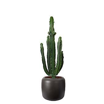 Kaktus – Wolfsmilch Kaktus in braunem Kunststoff Übertopf 'ELHO pure beads' als Set – Höhe: 110 cm