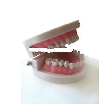 Medisinsk undervisning verktøy tenner modell dental modell