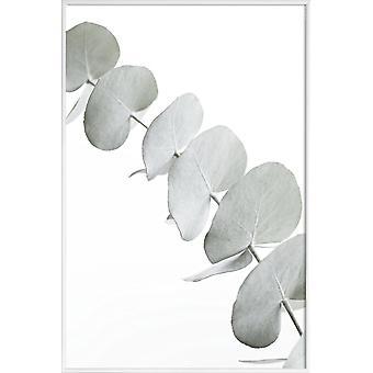 JUNIQE Print -  Eucalyptus White 3 - Blätter & Pflanzen Poster in Grün & Weiß