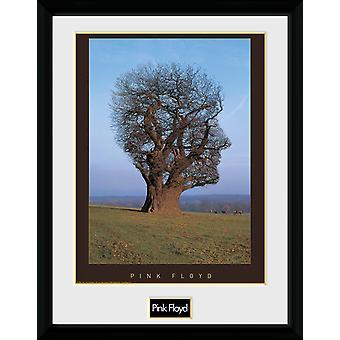 Pink Floyd-Tree Sammler Print