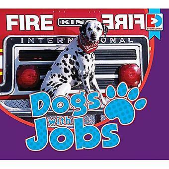 Honden met banen (Eyediscover)
