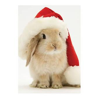 Santa Bunny Holiday Half Notecard by Galison & Illustrated by Warren Photographic Ltd