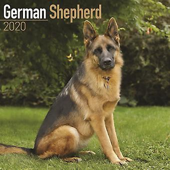 German Shepherd Calendar 2020 by Avonside Publishing Ltd