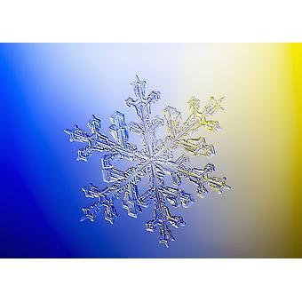 Valokuva-mikroskoopin näkymä todellinen lumihiutale osoittavat klassinen 6-sivuinen tähden muodon PosterPrint