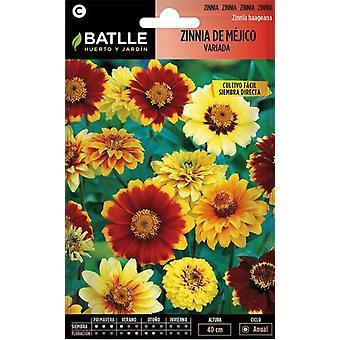 Batlle Zinnia From Mexico (Garden , Gardening , Seeds)