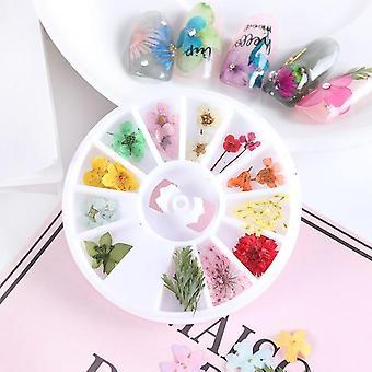 3d Tørret blomst Nail Art Dekoration, Blossom Daisy Floral Leaf Slider polsk