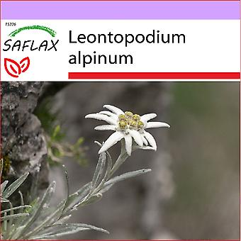 Saflax - 500 semillas - Edelweiss - L'edelweiss - Stella alpina - Edelweiss - Edelweiss