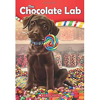 Le chocolat Lab (laboratoire de chocolat)