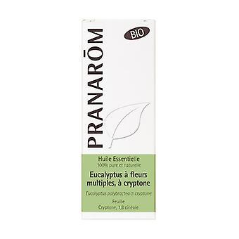 Huile essentielle d'Eucalyptus de fleurs 10 ml de huile essentielle
