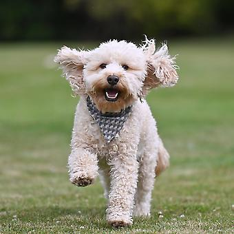 Charlie Dog Bandana - Holborn Taupe
