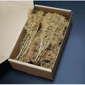 Miniatuur Chenopodium Spinosum - Train Zand Tafel Oorlog Scene Model
