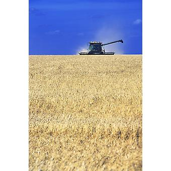 Spring Wheat Harvest Tiger Hills Manitoba PosterPrint