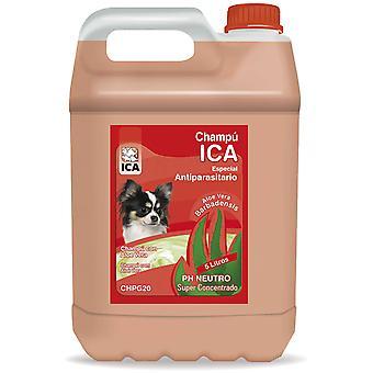 Ica Antiparbumic Shampoo 5Lt Aloe (Dogs , Grooming & Wellbeing , Shampoos)