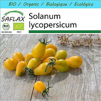 Saflax - Gift Set - 10 seeds - Organic - Tomato - Yellow Submarine - BIO - Tomate - Yellow submarine - BIO - Pomodoro - Yellow Submarine - Ecológico - Tomate - Submarino Amarillo - Tomate - Yellow Submarine
