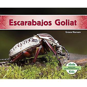 Escarabajos Goliat (Goliath Beetles) by Grace Hansen - 9781624026959