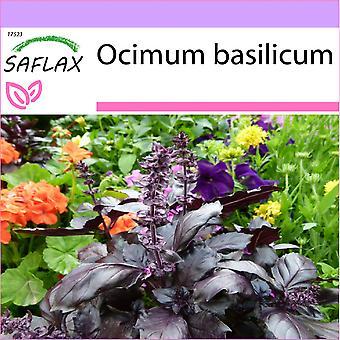 Saflax - 200 frø - Red Basil - Basilic rouge - Basilico rosso - Albahaca - Rotes Basilikum