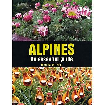 Alpines: Una guía esencial