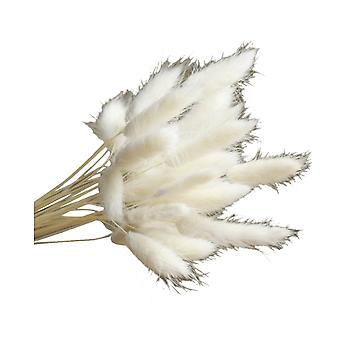 120PCS Natural Dry Flowers Decoration Rabbit Tail Type Grass White
