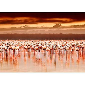 Behang muurschildering Afrikaanse Flamingo's