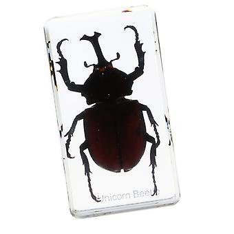 Insect Figure Model Creative Sample Resin Specimen Kids Education Paperweight