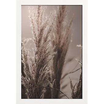 JUNIQE Print -  Pampas Reed 06 - Blätter & Pflanzen Poster in Braun