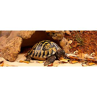 Exo Terra Cave for Turtle (Reptiles , Decoration , Caves & Rocks)