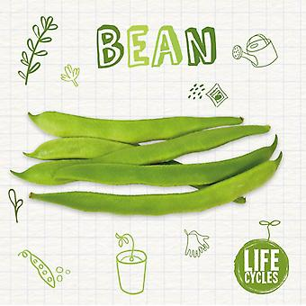 Bean by Kirsty Holmes