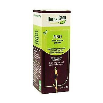 Pinho Macerado Glicerinado 50 ml