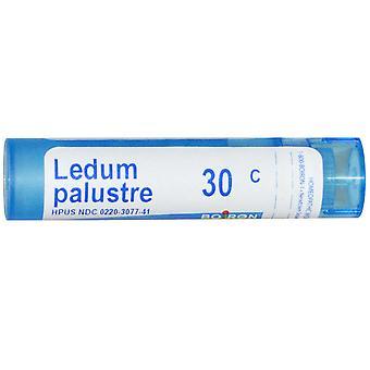 Boiron, Single Remedies, Ledum Palustre, 30C, 80 Pellets