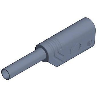 SKS Hirschmann MST S WS 30 Au Jack plug Plug, em linha reta diâmetro do pino: 2mm Grey 1 computador (es)