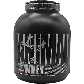 Universal Nutrition Animal Whey - 54 Portionen - Erdbeere