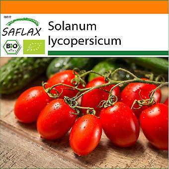 Saflax - Garden in the Bag - 15 seeds - Organic - Tomato - Roma - BIO - Tomate - Roma - BIO - Pomodoro - Roma - Ecológico - Tomate - Roma - BIO - Tomate - Roma