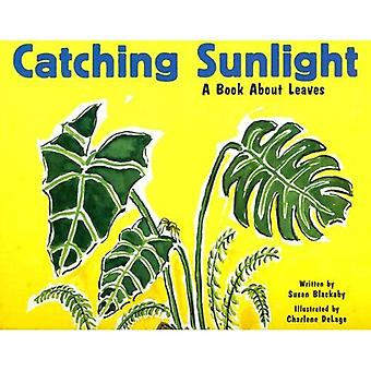Catching Sunlight