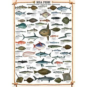 Eurographics Sea Fish Jigsaw Puzzle (1000 Pièces)