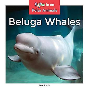 Béluga (animaux polaires)