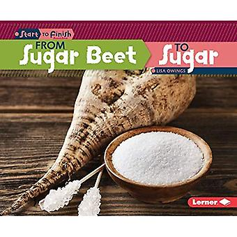 From Sugar Beet to Sugar (Start to Finish, Second)
