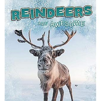 Reindeer Are Awesome (A+ Books: Polar Animals)