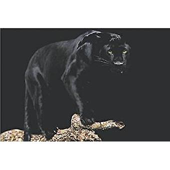 Poster - Black Panther - Wall Art CJ3639