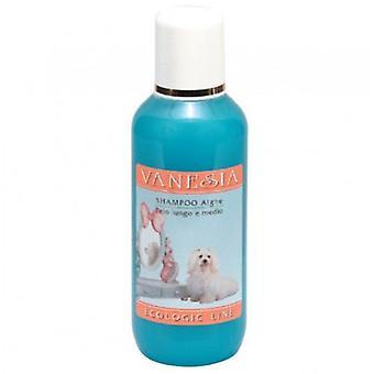 San Bernard Shampoo en Algen 10 Ltrs - Vanesia