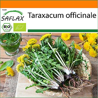 Saflax - Hage i posen - 400 frø - Organisk - Løvetann - BIO - Pissenlit - BIO - Tarassaco o dente di leone - Ecológico - Diente de león - BIO - Löwenzahn