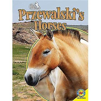 Przewalskis häst (allt om hästar)